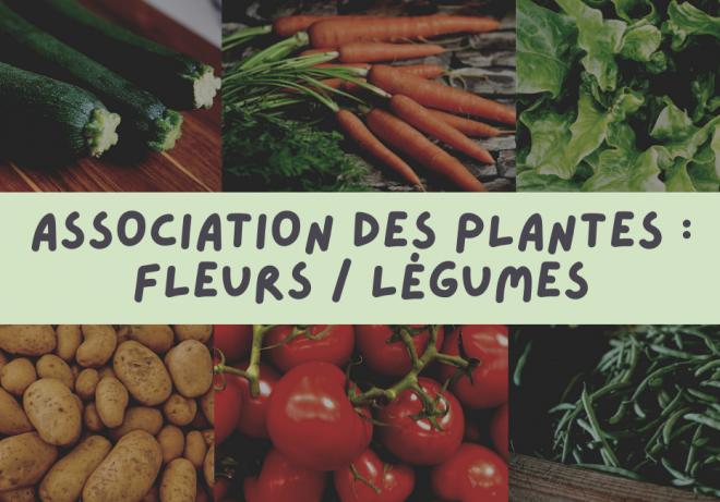 association-des-plantes-fleurs-legumes-ragtjardinetmaison